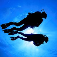 ダイビングが好きの画像