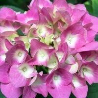 花が好きの画像