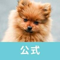 犬が好きの画像