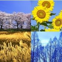 四季を楽しみたい✨の画像